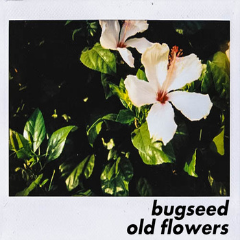 Bugseed Old Flowers